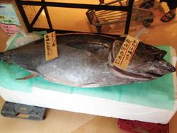 mfukushima150919c