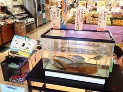 mfukushima150919f